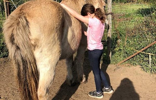 Casa Natura: Kom in je kracht met paardenkracht
