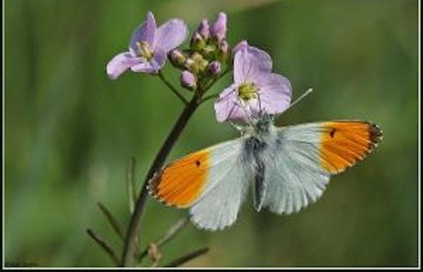 Vlindertocht