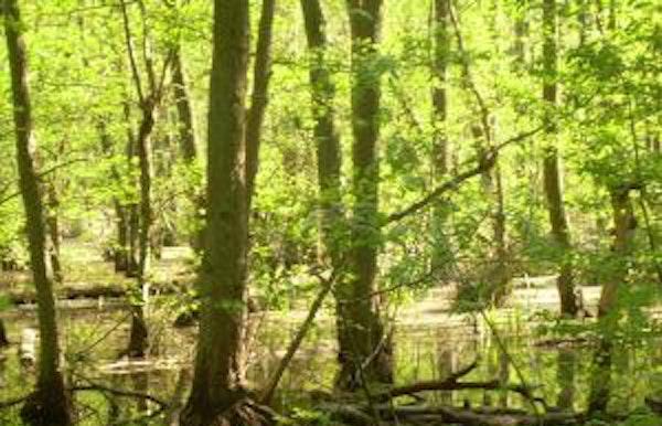 Het verborgen leven van planten en bomen