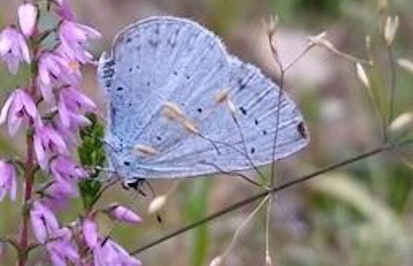 Mottenzotten en vlindervinders
