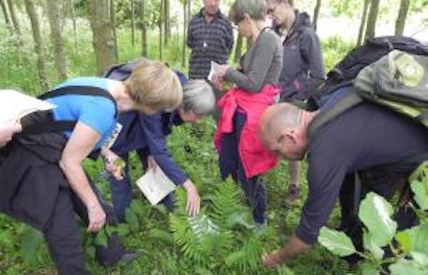 Planteninventarisatie in Vlassenbroek
