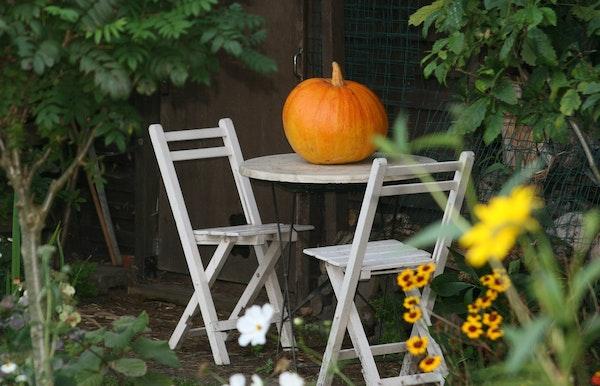 Halloween stadswandeling voor gezinnen met kinderen!