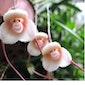 Orchideeën - Een wondere wereld