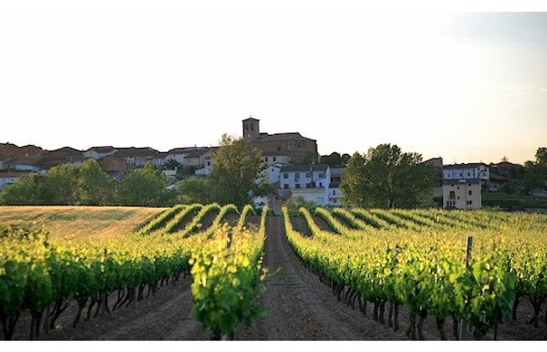 Gevestigde en nieuwe 'cool climate'- wijnen uit West-europa