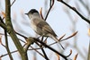 Wandeling met natuurgids: Voor Vroege Vogels