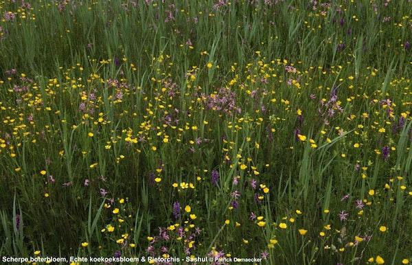 Natuurexploratie Geleide natuurwandeling in het Vlaams natuurreservaat 'Sashul'   - 19 jun