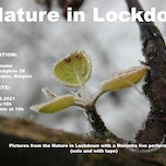 Nature in Lockdown