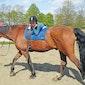 Paardrijden en Dans